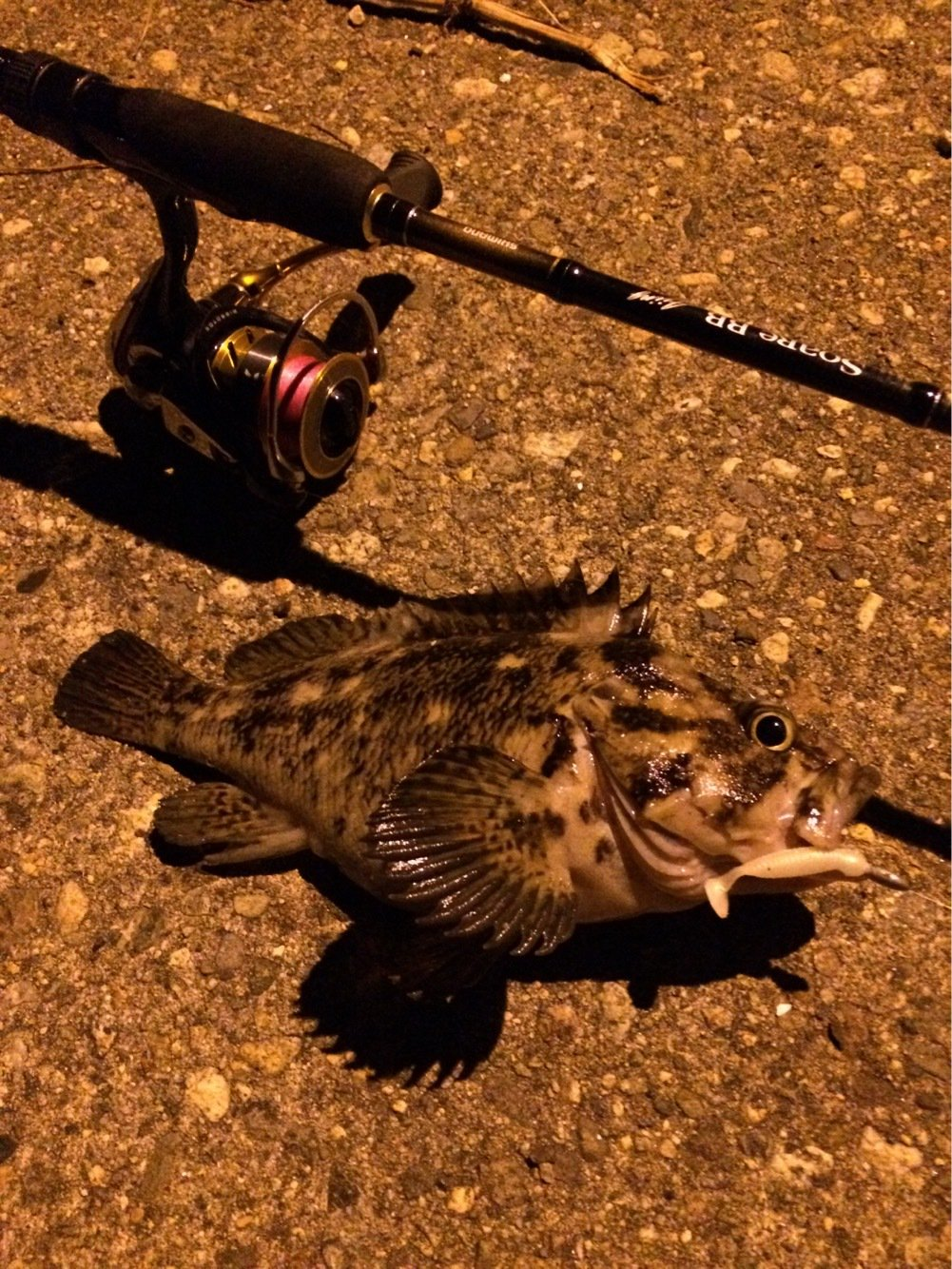 Alexさんの投稿画像,写っている魚はメバル