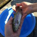 CIMAさんの埼玉県大里郡での釣果写真