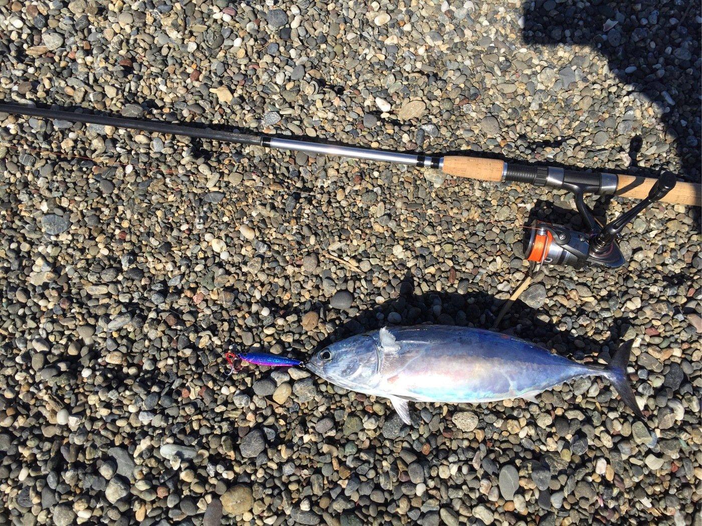 きり@高知さんの投稿画像,写っている魚は