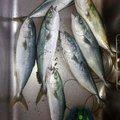 キタヒロさんの新潟県十日町市での釣果写真