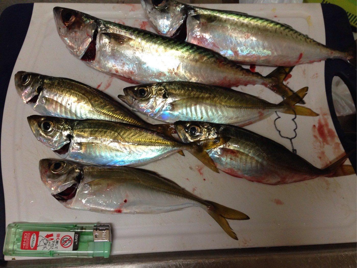 あっちさんの投稿画像,写っている魚はマサバ