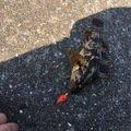 黒猫Kさんの兵庫県たつの市でのタケノコメバルの釣果写真