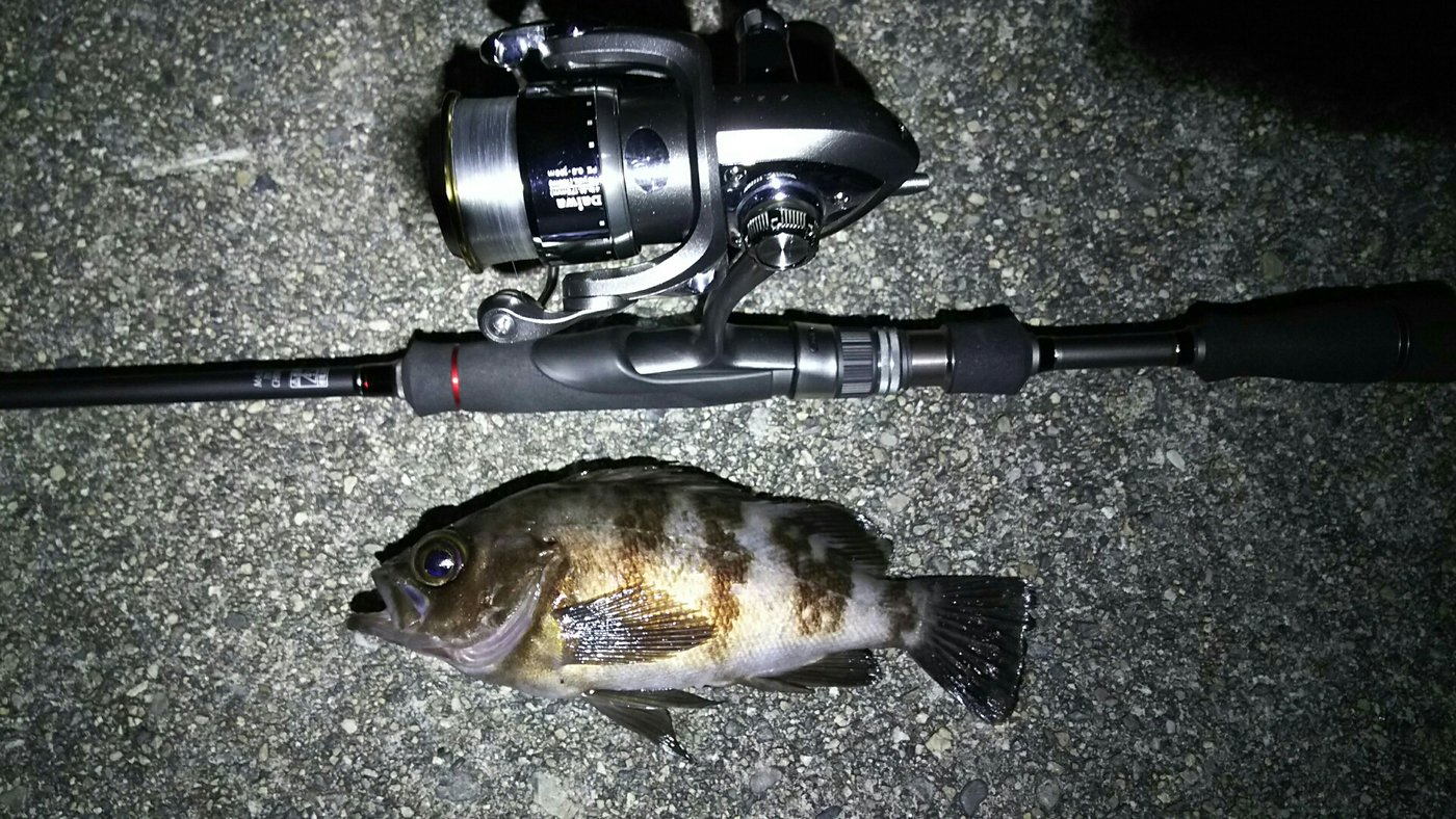 鳴神(なるかみ)さんの投稿画像,写っている魚はメバル