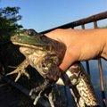 カトリーヌさんの三重県員弁郡での釣果写真