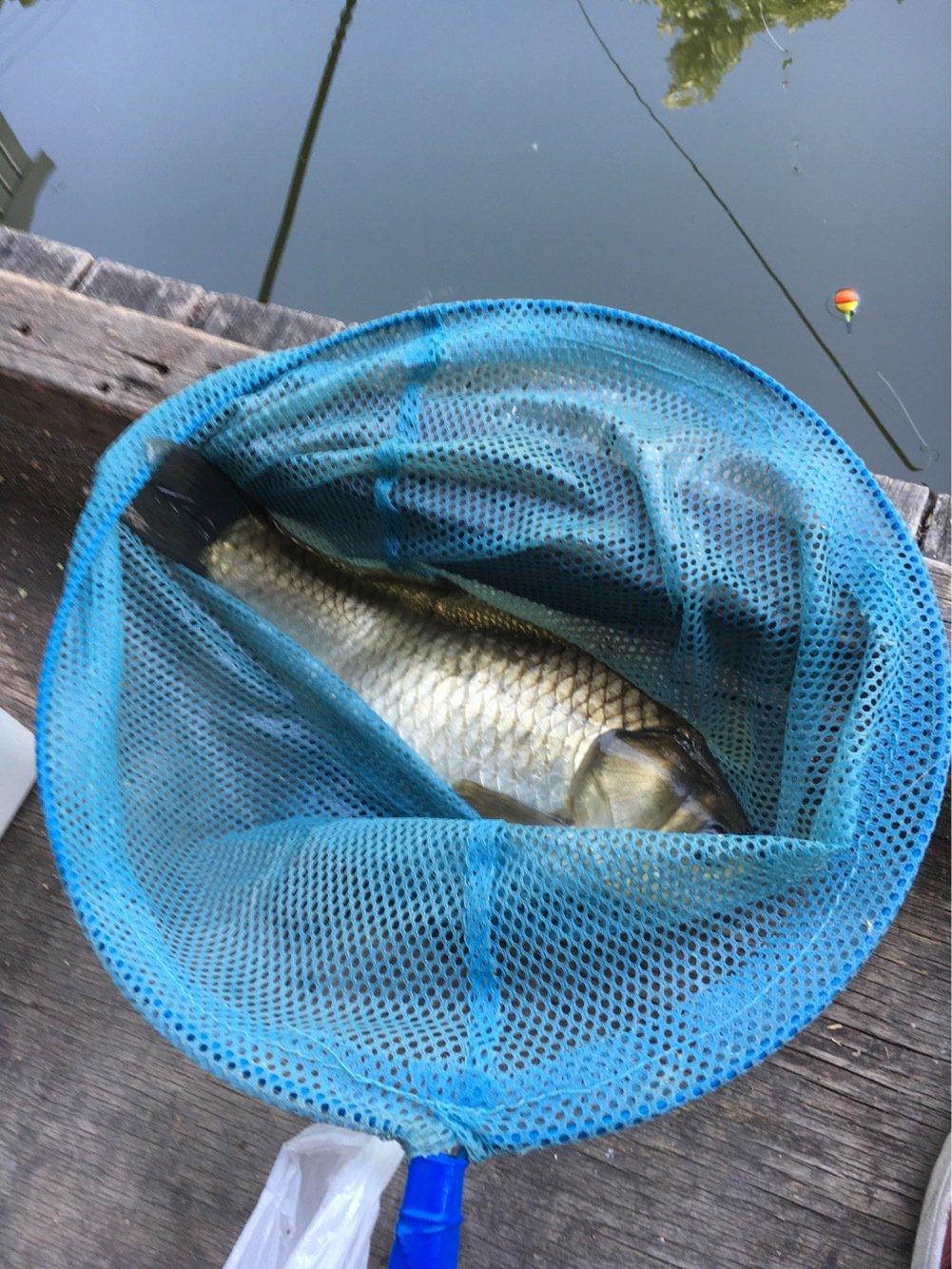 tosshyさんの投稿画像,写っている魚はギンブナ