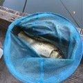 tosshyさんの大阪府交野市での釣果写真