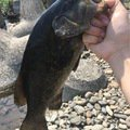 yuto.tanoさんの栃木県足利市での釣果写真