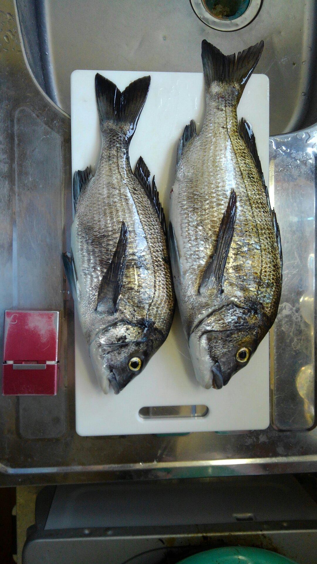 たつぽんさんの投稿画像,写っている魚はクロダイ