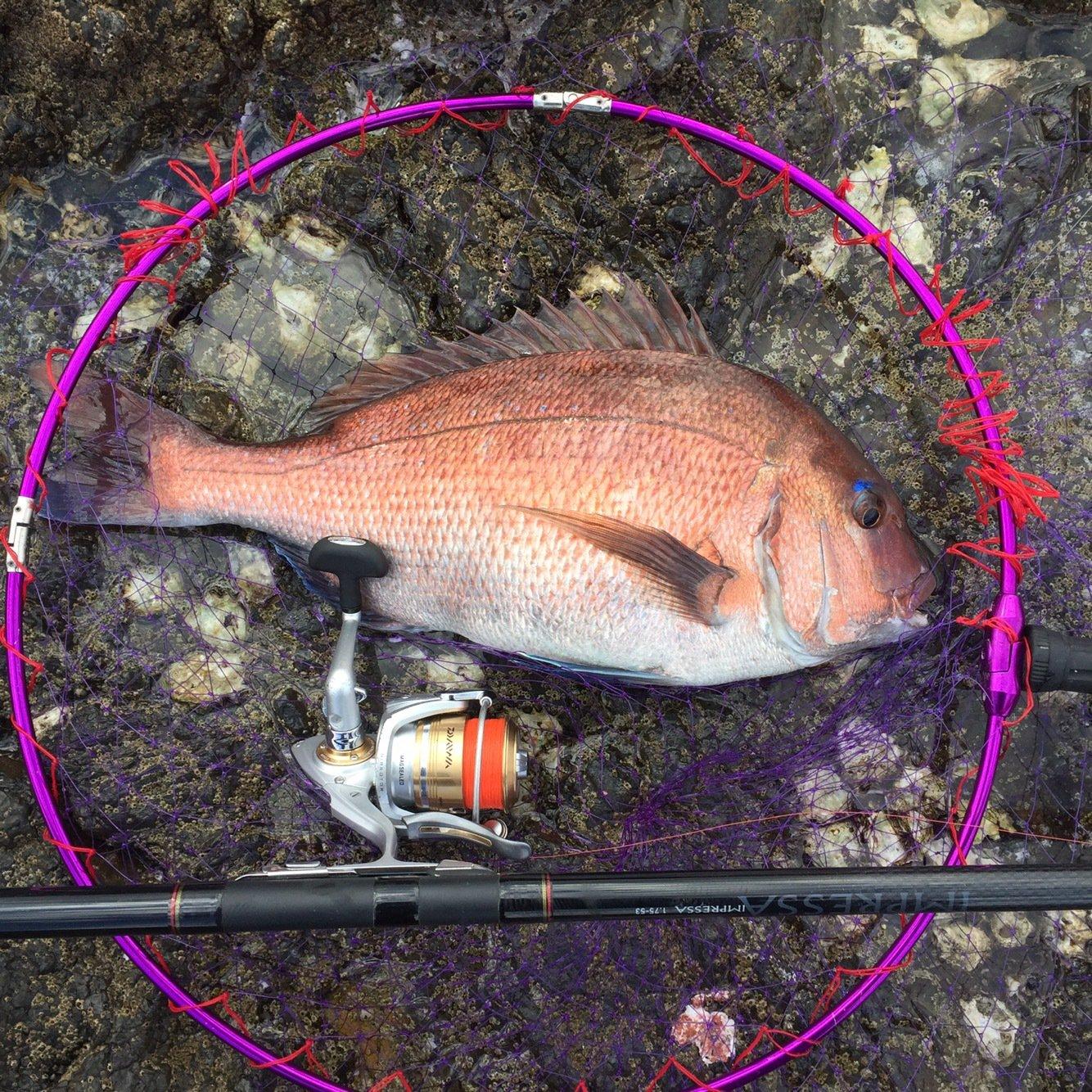 佐藤さんの投稿画像,写っている魚は