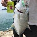 ゲッソーさんの宮崎県日南市でのロウニンアジの釣果写真