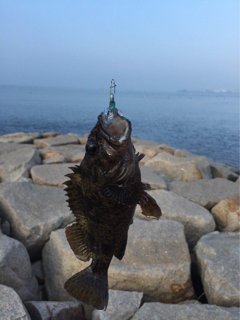 信さんの投稿画像,写っている魚はメバル