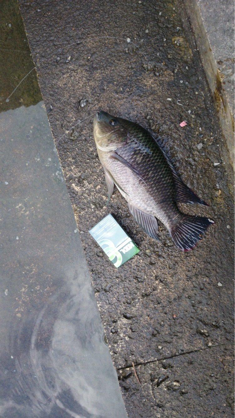 ウエキチさんの投稿画像,写っている魚は