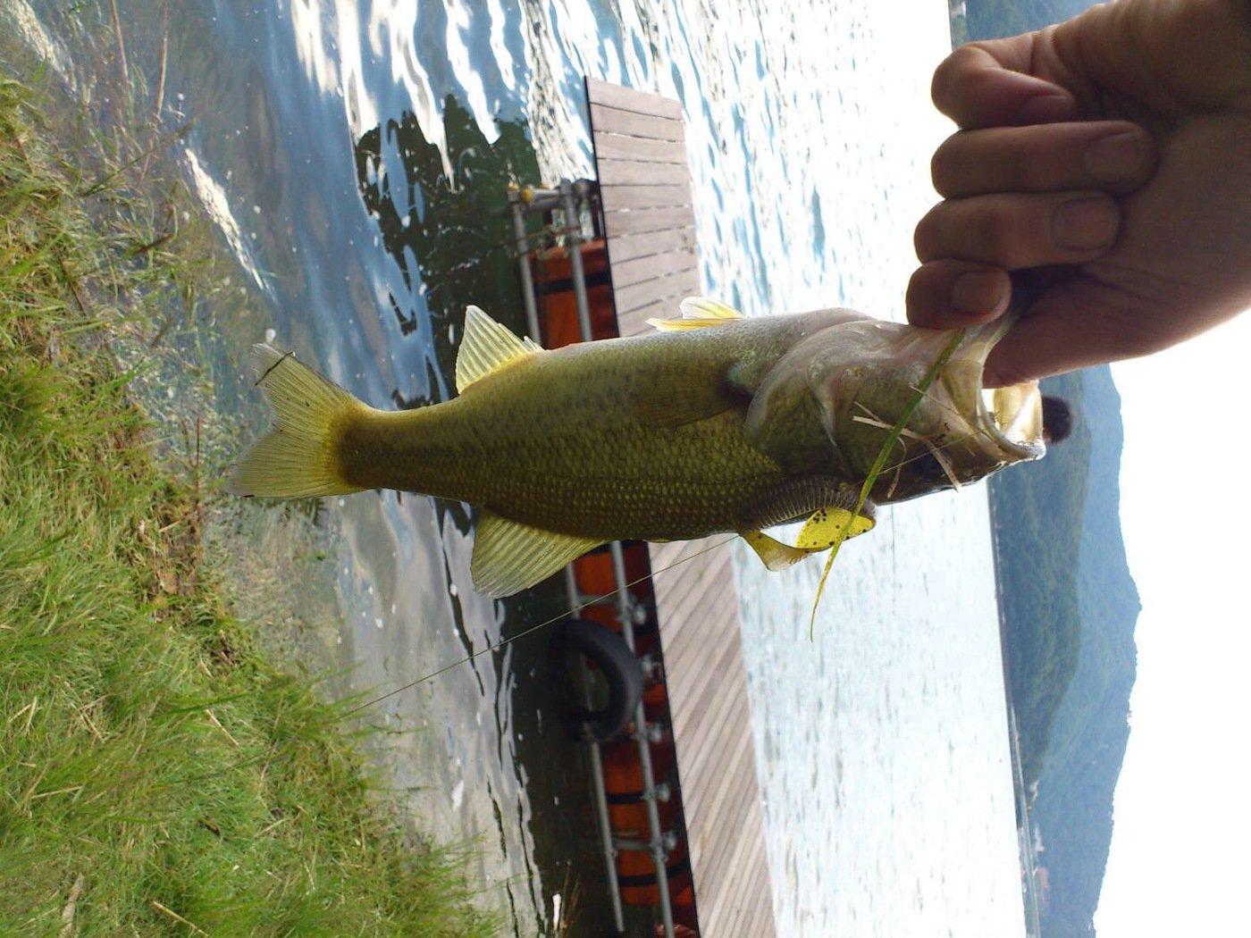 ウエキチさんの投稿画像,写っている魚はブラックバス