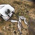 YAMADAさんの佐賀県三養基郡での釣果写真
