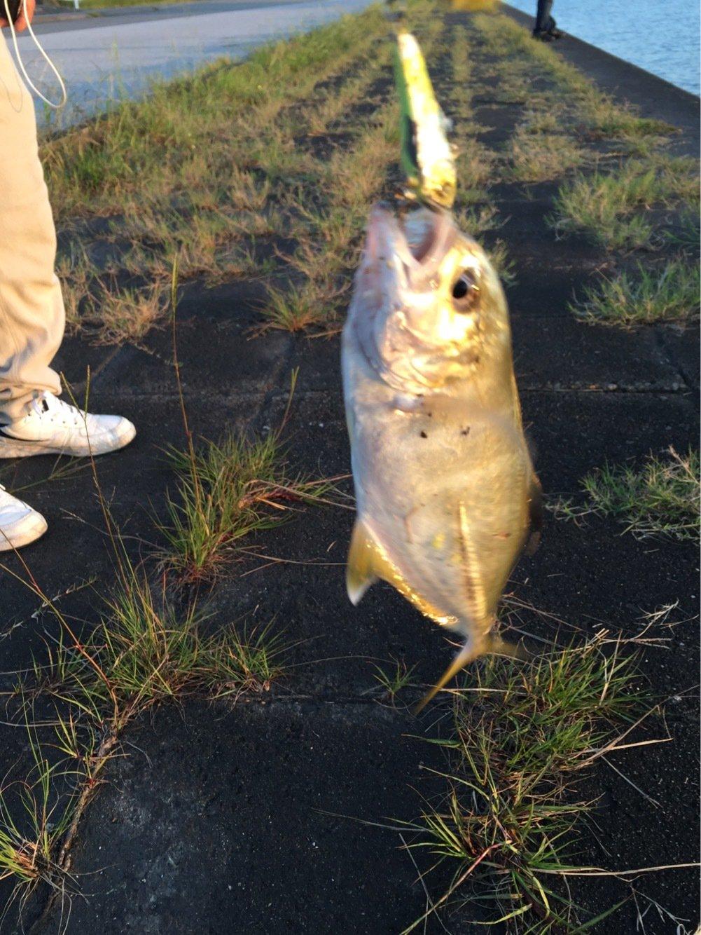 タカハシ シュウヘイさんの投稿画像,写っている魚はギンガメアジ