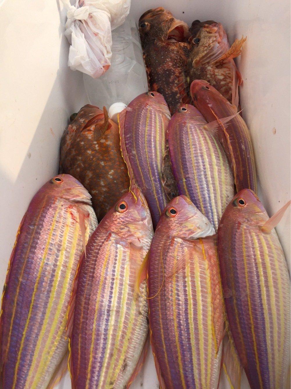 sJimさんの投稿画像,写っている魚はイトヨリダイ