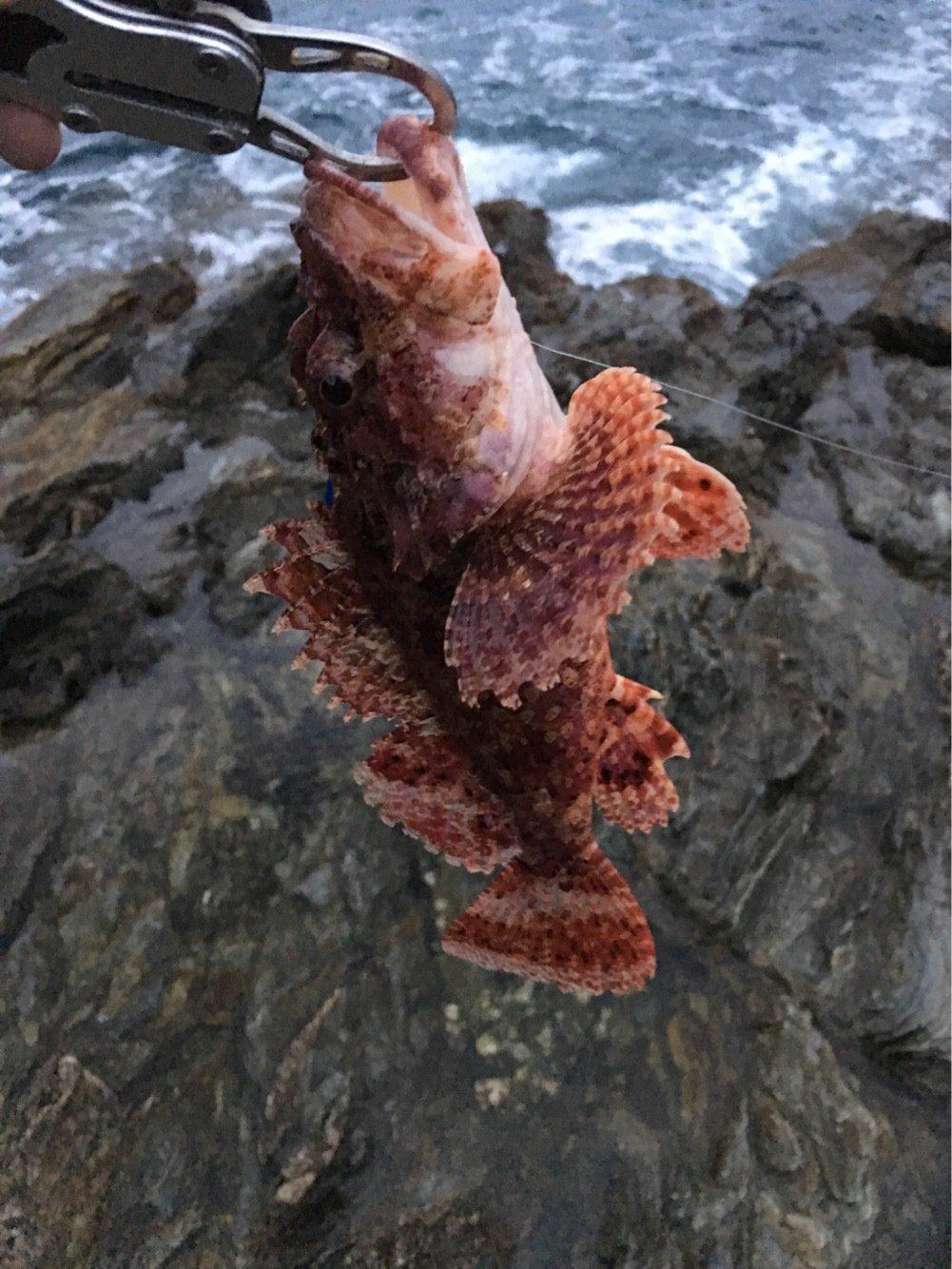 ジグ太郎さんの投稿画像,写っている魚はオニカサゴ