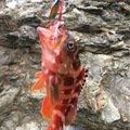 ジグ太郎さんの長崎県長崎市でのアカハタの釣果写真