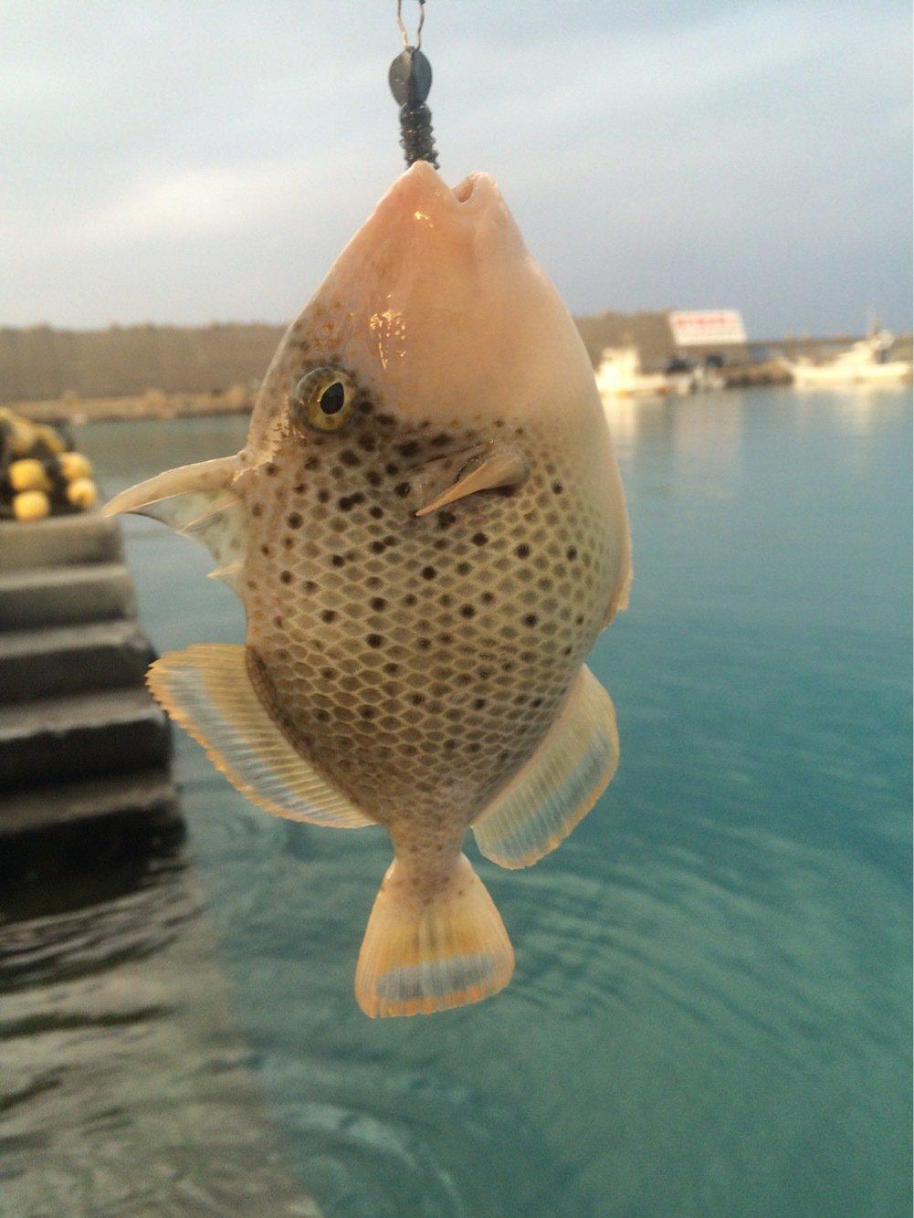 マカロンさんの投稿画像,写っている魚はカワハギ