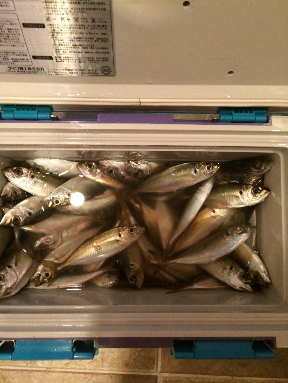 のぶさんの投稿画像,写っている魚はアジ