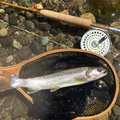 daicon さんの山形県西村山郡での釣果写真
