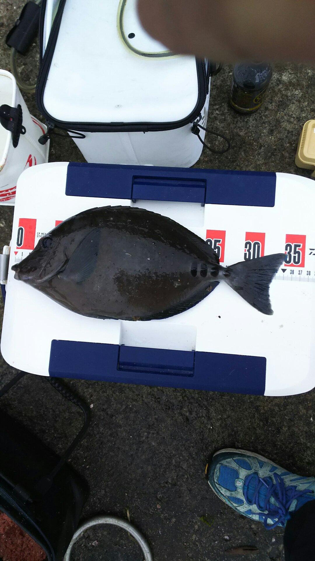 りょうさんの投稿画像,写っている魚はニザダイ