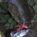 自由の翼さんの埼玉県北葛飾郡での釣果写真