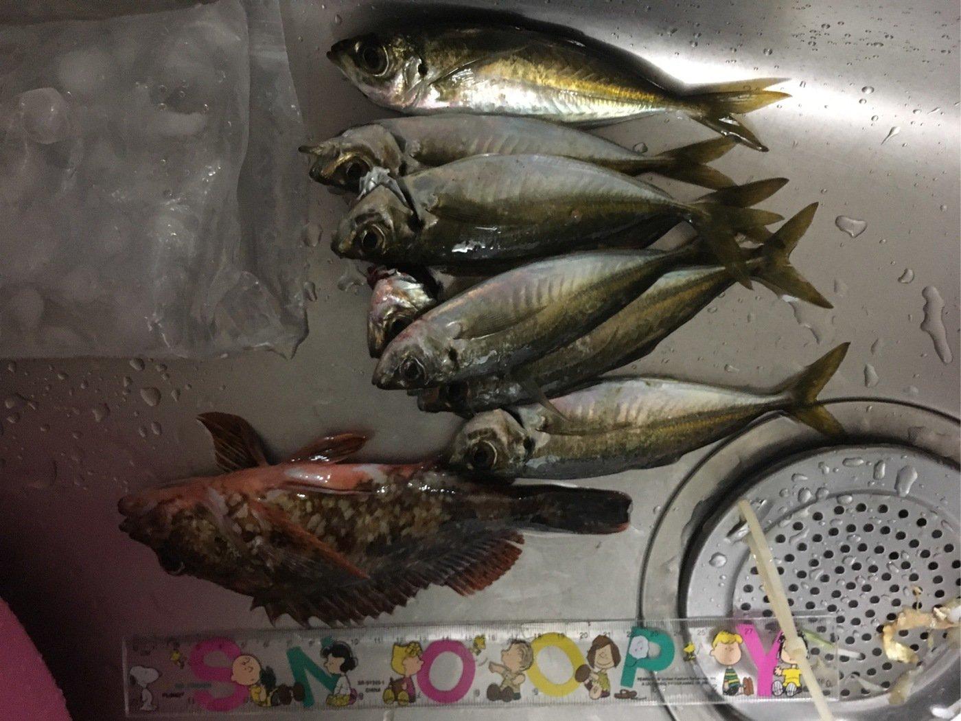 よりるんさんの投稿画像,写っている魚はカサゴ