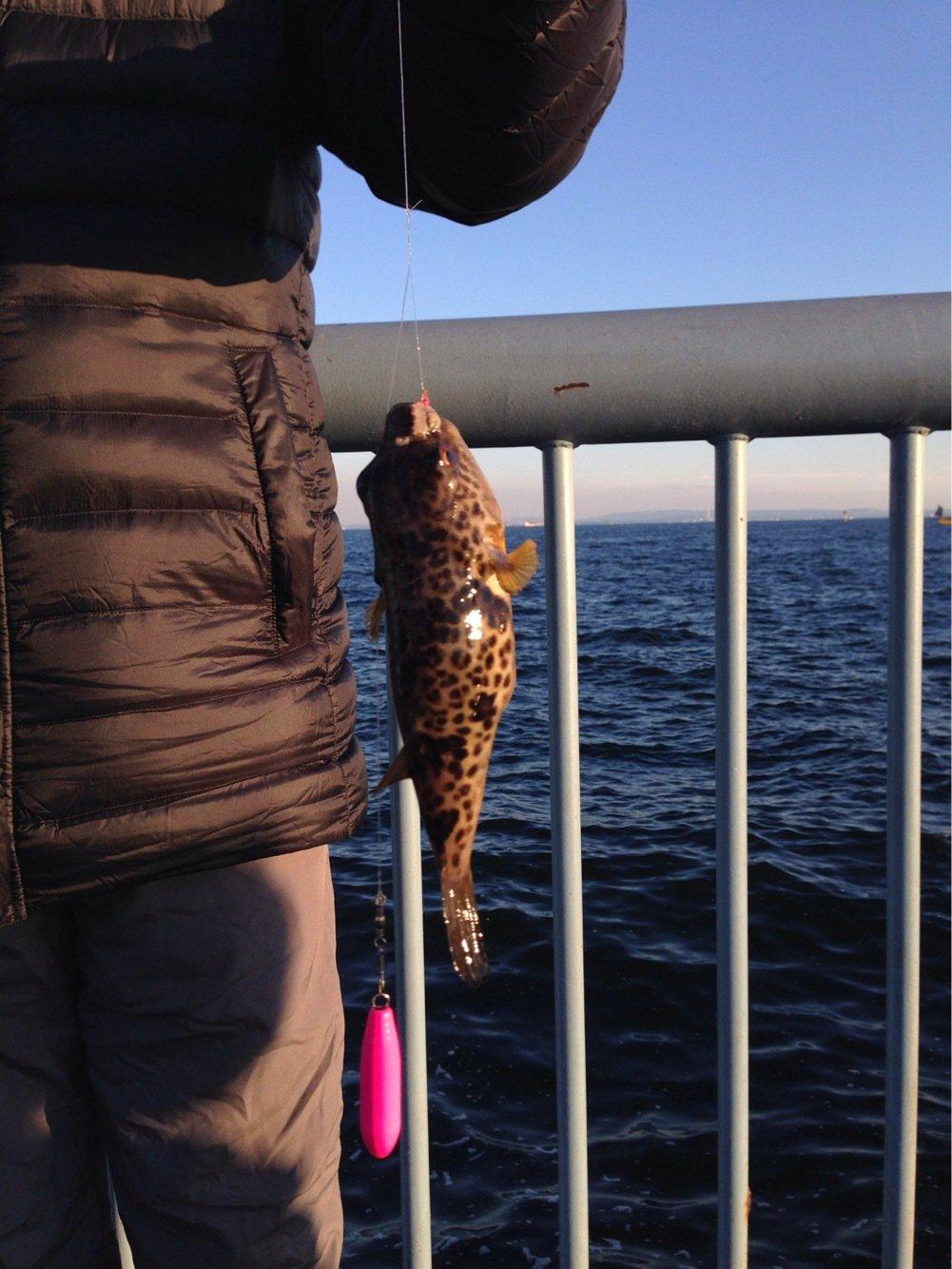 maybelinさんの投稿画像,写っている魚は