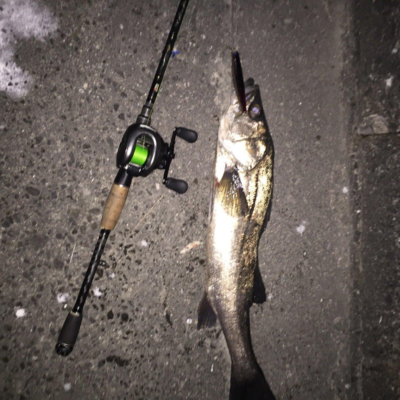 Rさんの投稿画像,写っている魚はスズキ