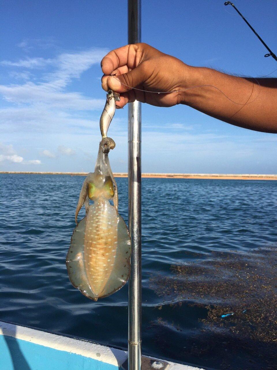 おかたくさんの投稿画像,写っている魚はアオリイカ
