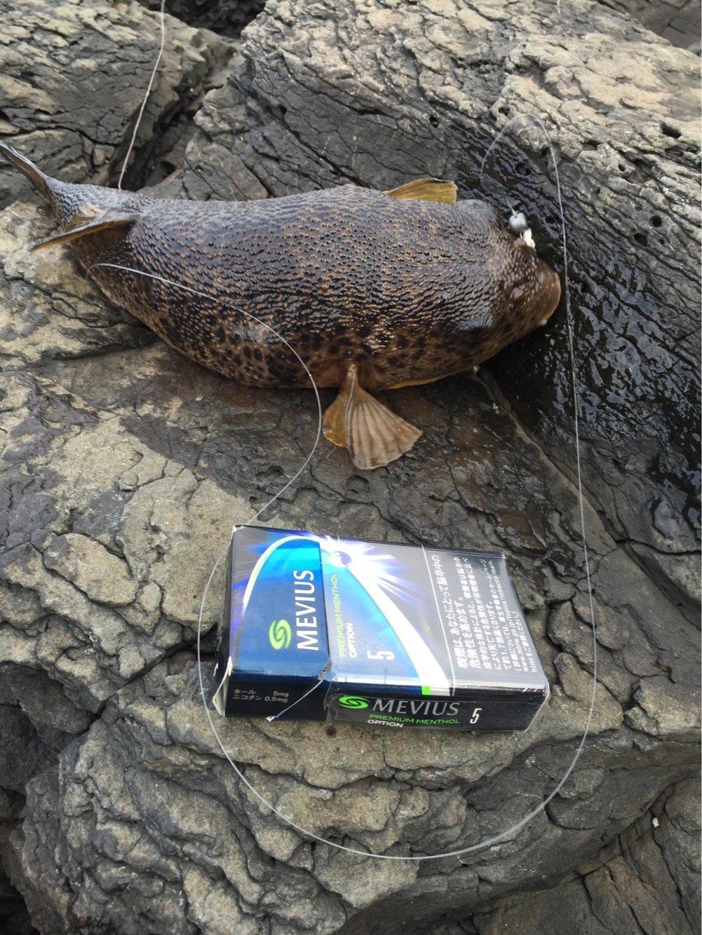 しゅーさんの投稿画像,写っている魚はアジ