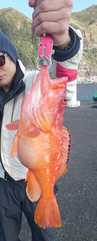 エスカさんの投稿画像,写っている魚はアカハタ