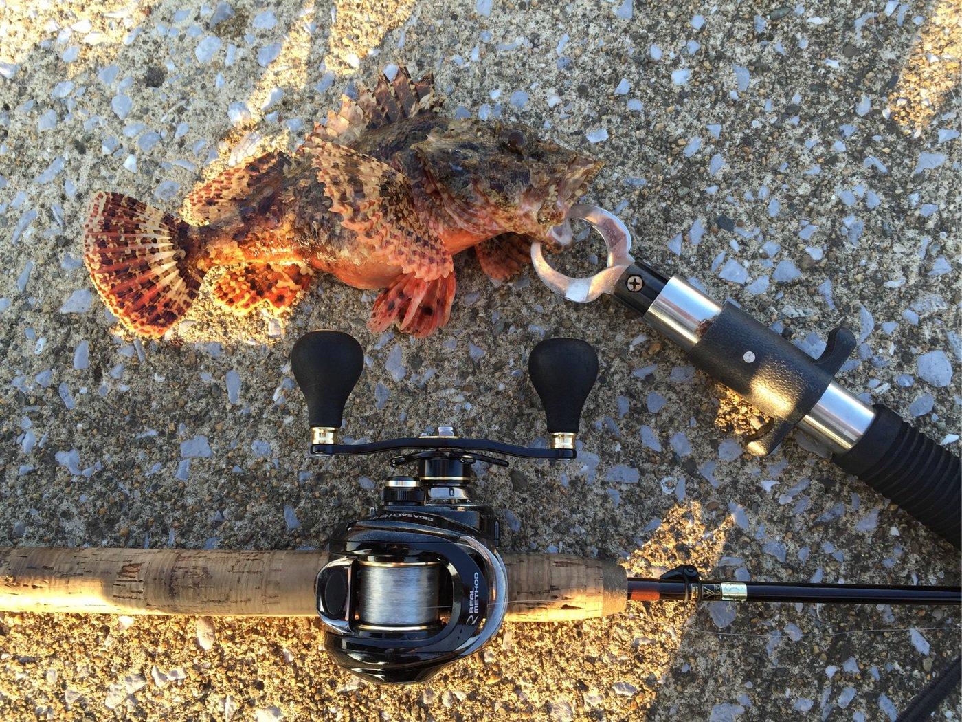 tekさんの投稿画像,写っている魚はオニカサゴ