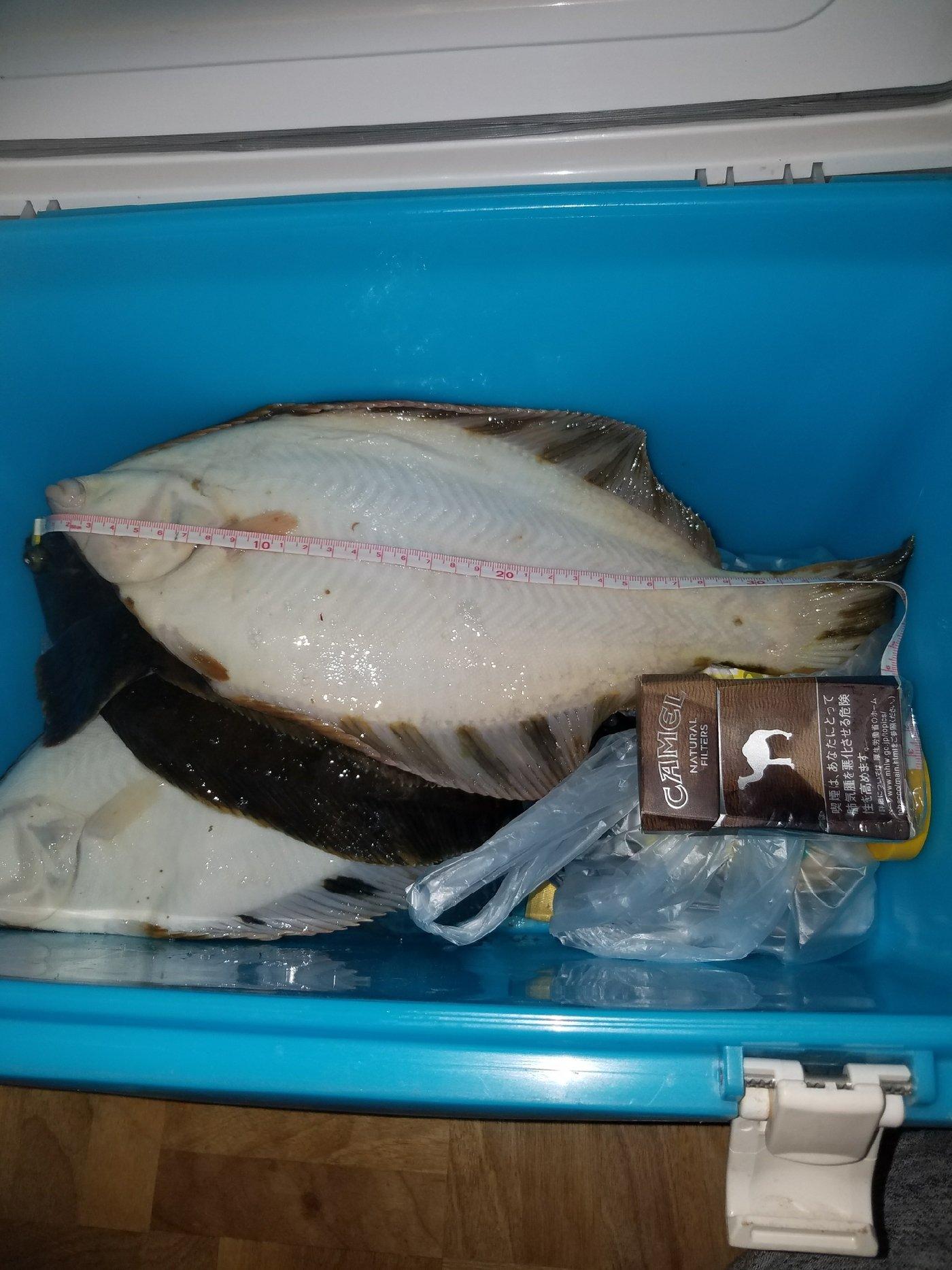 はじめさんの投稿画像,写っている魚はクロガレイ