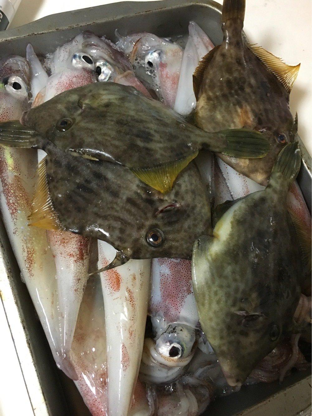 ゆーみさんの投稿画像,写っている魚はヤリイカ