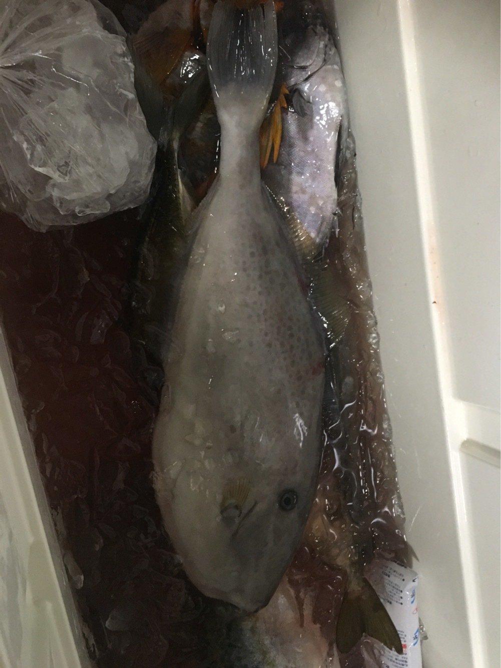 ゆーみさんの投稿画像,写っている魚はウスバハギ