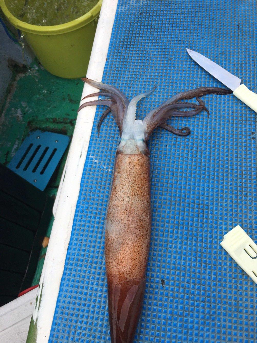 ゆーみさんの投稿画像,写っている魚はスルメイカ