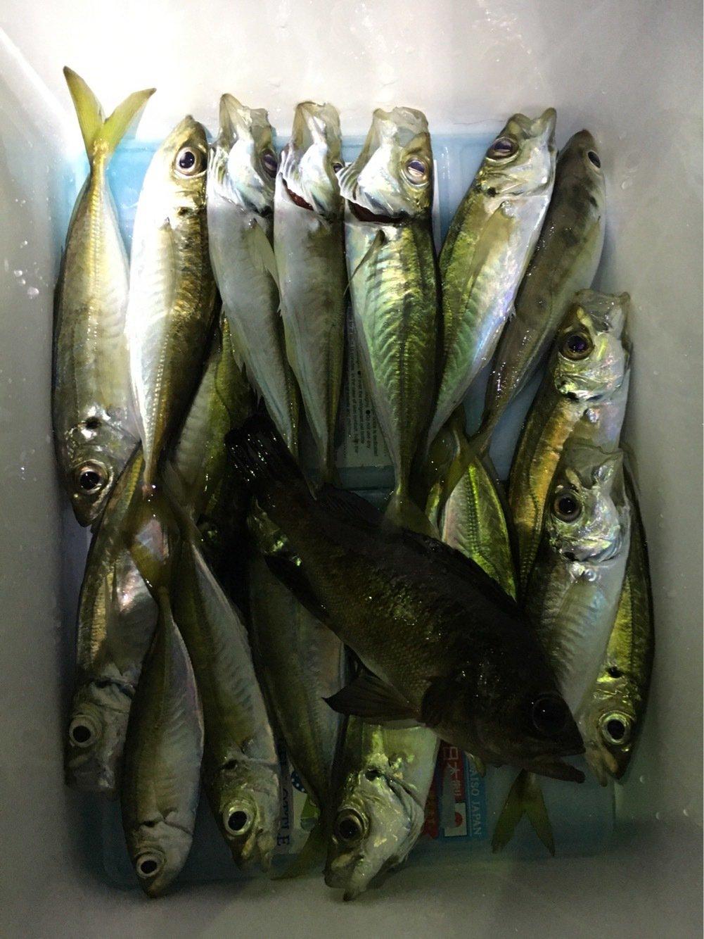 なおさんの投稿画像,写っている魚はアジ