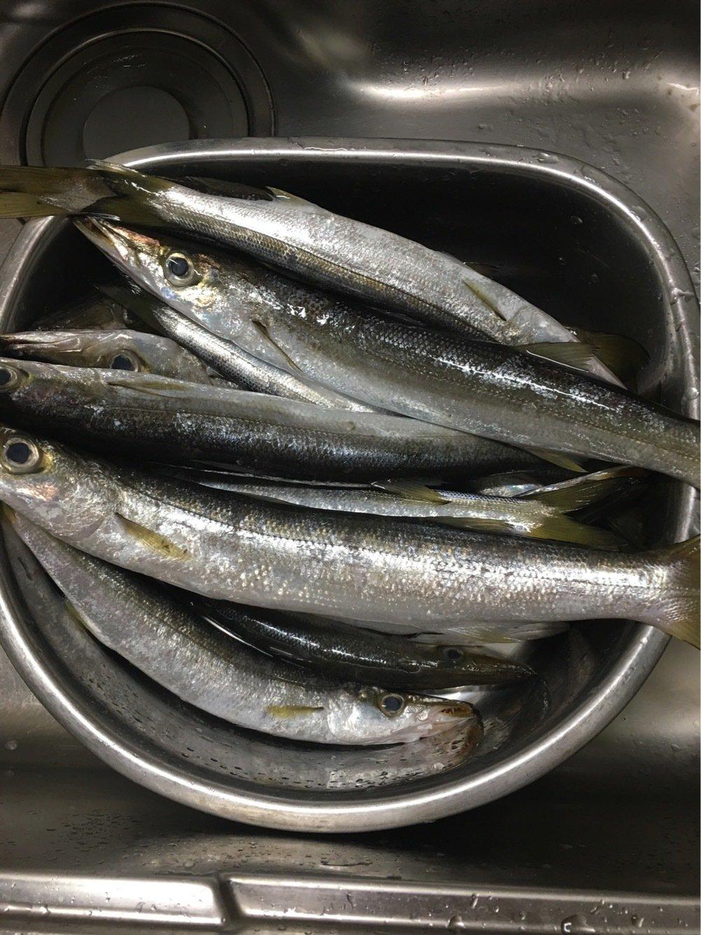ヒロユキさんの投稿画像,写っている魚はカマス