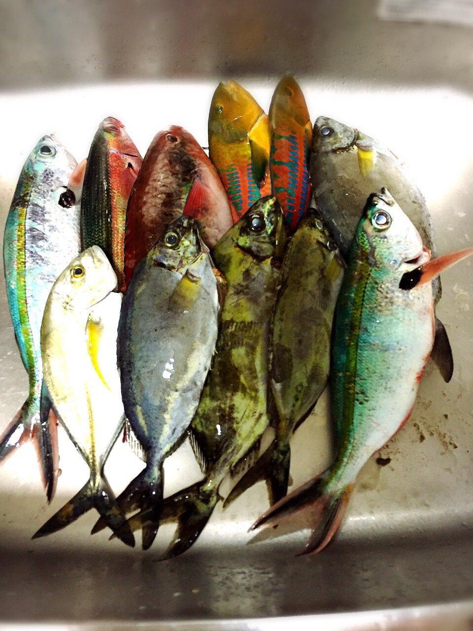 ハジメさんの投稿画像,写っている魚はマサバ