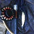 りーさんさんの栃木県日光市での釣果写真