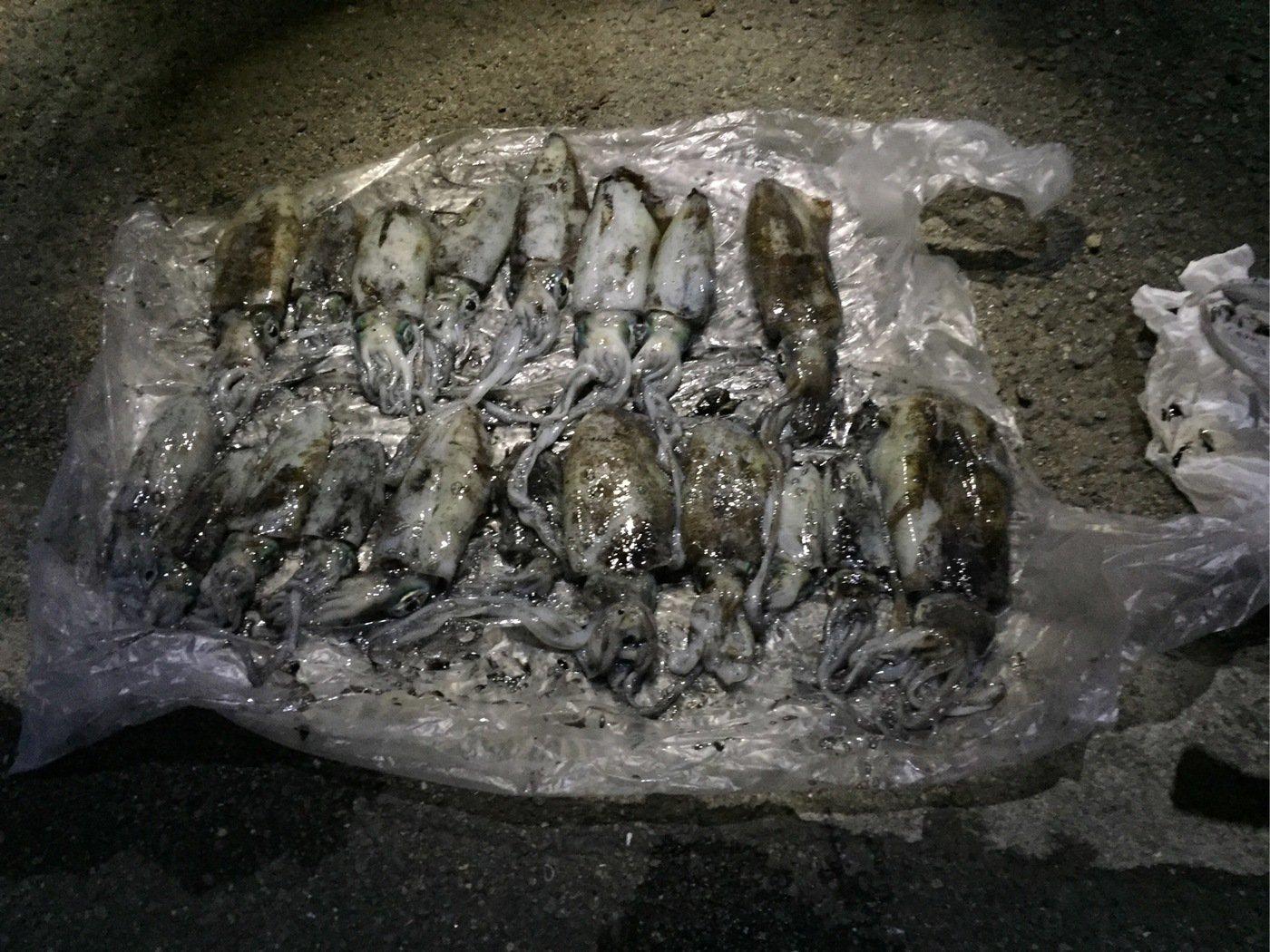 釣りキチさんの投稿画像,写っている魚はアオリイカ