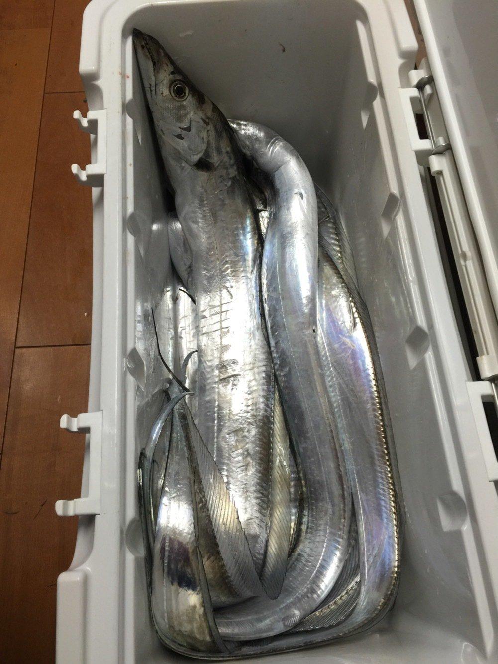 だいすけさんの投稿画像,写っている魚はタチウオ