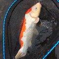 ラテス41さんの福岡県築上郡での釣果写真