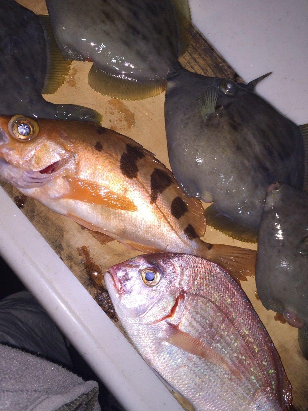 せいくんさんの投稿画像,写っている魚はチダイ