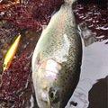 れいんぼーほたてさんの北海道紋別郡での釣果写真