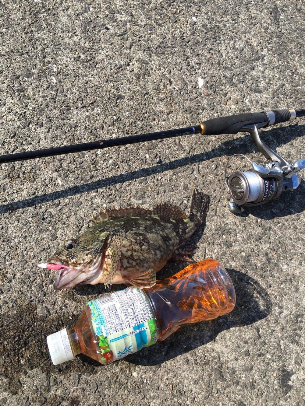 カメさんの投稿画像,写っている魚はカサゴ