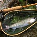 TAKAさんの山梨県大月市での釣果写真