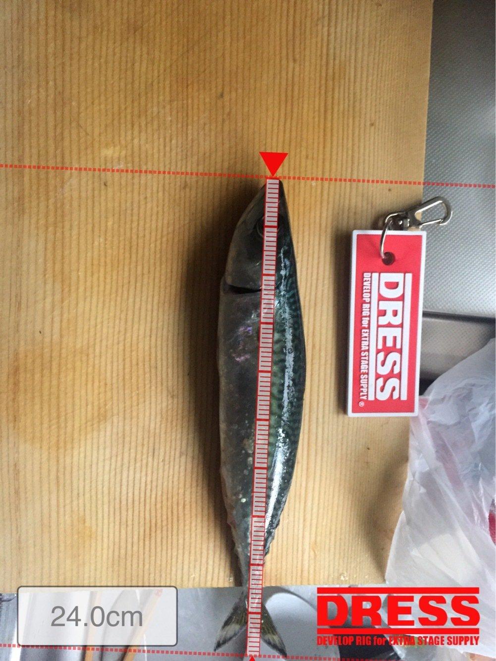 ぬまさんの投稿画像,写っている魚はマサバ